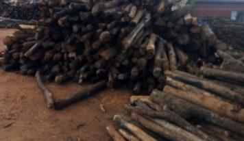 N'Zérékoré : la déforestation gagne du terrain dans l'indifférence des autorités compétentes