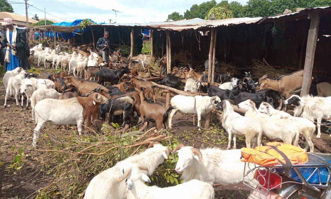 Aïd El Ada: pas de bousculade au parc à bétail de Labé