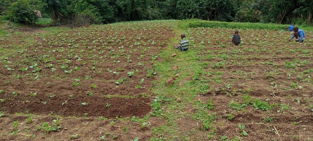 Préfecture de Mali: plus de 400 agriculteurs perdent leurs récoltes