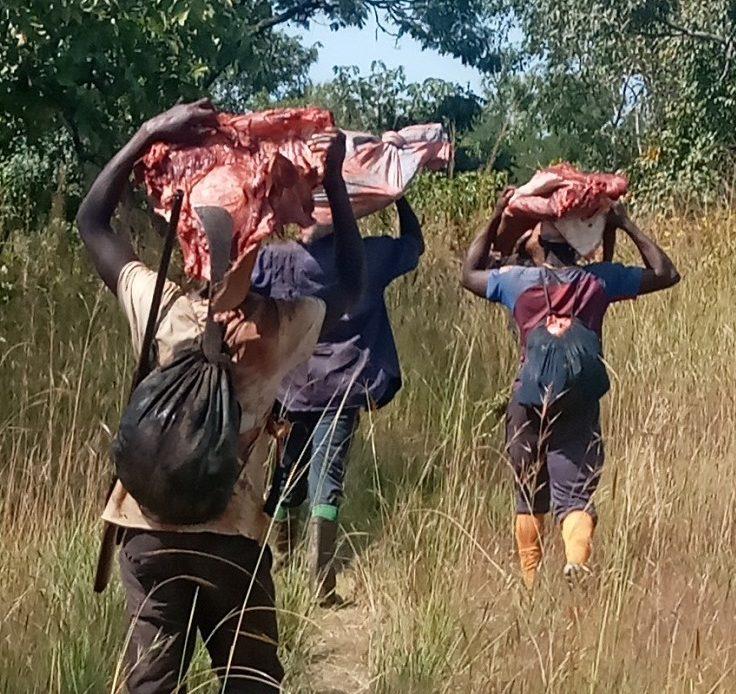 Chasse aux éleveurs de Koumban (Kankan) : plus de 207 bœufs tués, 165 Kg d'or emportés, des cases brûlées…