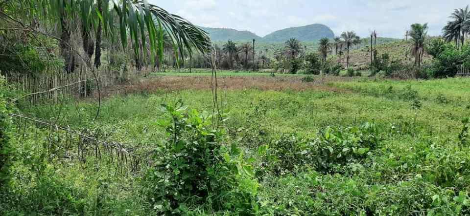 """KHORIRA : un domaine """"vendu"""" à une famille guinéo-libanaise au cœur d'un conflit avec la population locale"""