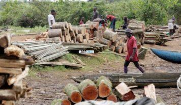 Koubia-Environnement: Situation de la coupe abusive des bois